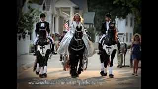 Mackinac Island's Festival Of the Horse ~