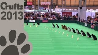Obedience Dog Championships - Day 3 - Stay Tests - Crufts 2013