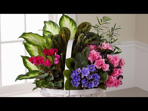 Какой комнатный цветок лучше подарить?