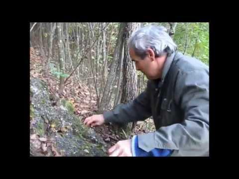 Guarire un piede di un fungo