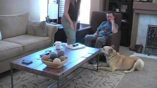 Dog Training: Stop Barking and Jumping on Guests