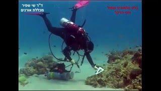שיפוץ ריף האלמוגים - שי שפיר