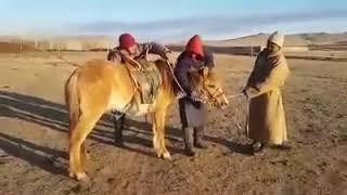 Прикол не обижайте животных