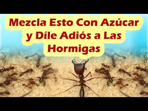 Mezcla Esto Con Azúcar y Dile Adiós a Las Hormigas COMO ELIMINAR HORMIGAS DE LA CASA RAPIDO