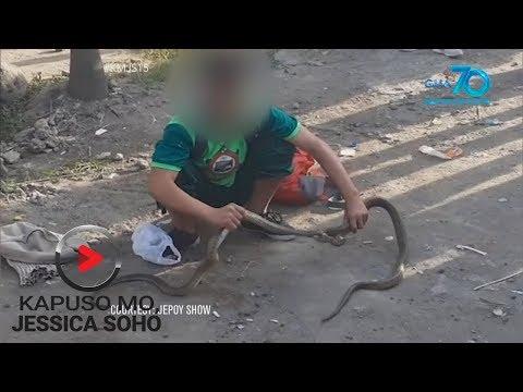 [GMA]  Kapuso Mo, Jessica Soho: Bata, nanghuhuli at nagbebenta ng mga cobra?