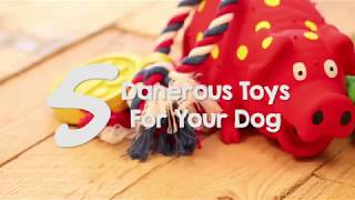 5 Dogs Toys That Are Dangerous