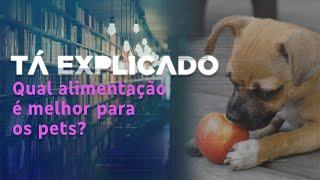 O que é melhor para os pets, ração ou alimentação natural? | Tá Explicado
