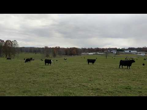 Bettinger bluff farm ny for sale bitit earn bitcoins for free apk for android