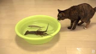 مازيكا شاهد الفيديو لتعرف حقيقة القطط تحميل MP3