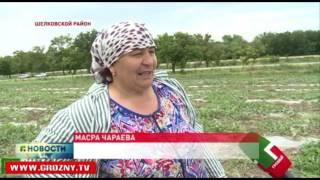 В Чечне скоро начнется сезон сбора бахчевых культур