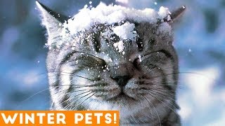 Funniest Winter Animal Video Compilation 2018 | Funny Pet Videos - Video Youtube