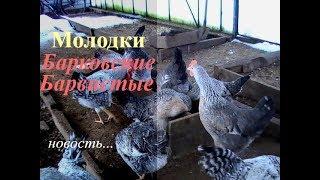 video-russkoe-molodka-na-kameru-golih