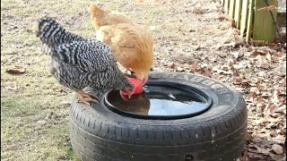 Preventing Livestock Water Containers From Freezing