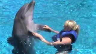 Turkiet Simning Med Delfiner Juni 9, 2013