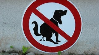 50 Funniest Road Signs
