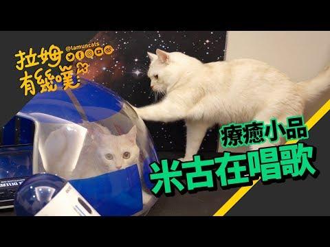 你有聽過貓咪唱歌嗎?他來唱給你聽!
