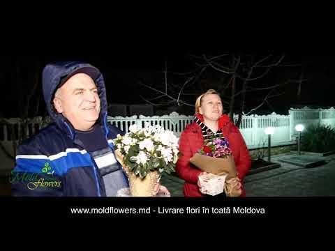 Anunturi erotice Strășeni Moldova