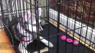 Treat Yo Dog Demo (featuring Ajax)