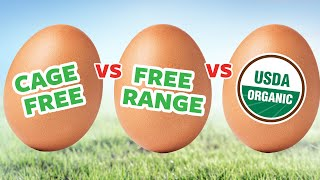 Cage Free, Free Range & Organic Eggs - What's the Difference? | Ask Organic Valley
