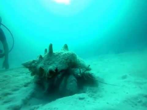 Scuba diving in Dominican Republic