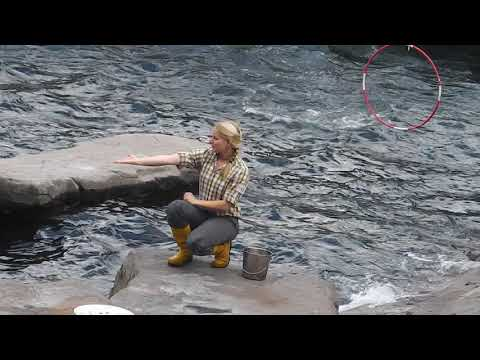 Single wohnung falkensee