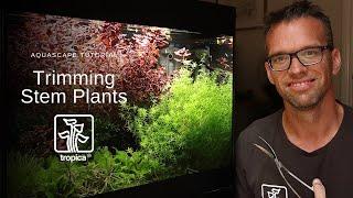 Metody przycinania roślin
