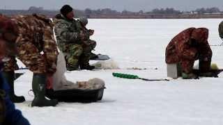 Зимняя рыбалка на окуня в новосибирской области