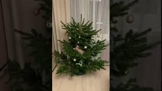 28.11.2020 - Кошека Марисабель уехала домой! (видео из дома)