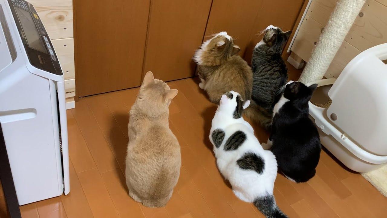 後頭部が5匹そろうと和む猫