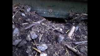 How to Catch Barn Rats and Mice Without Poison or Bait