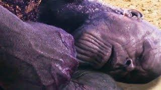 Нам слили как умрет Танос в Мстители 4: Финал