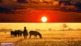 African Music | African Savannah | Relax, Study & Ambience