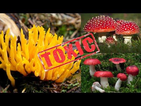 I migliori mezzi da un fungo su piedi