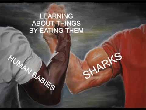 Liberal Scientists Outlaw Shark Attacks!!!!!