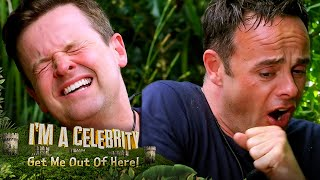 Ant & Dec FINALLY take on a Bushtucker Trial!   I'm A Celebrity... Get Me Out Of Here!