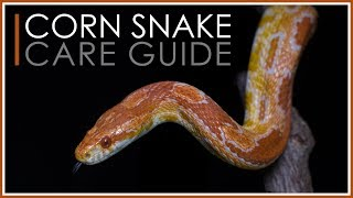 Complete Corn Snake Care Guide | 2018 Edition