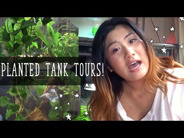 FISH TANK TOURS || Betta Fish Planted Tanks