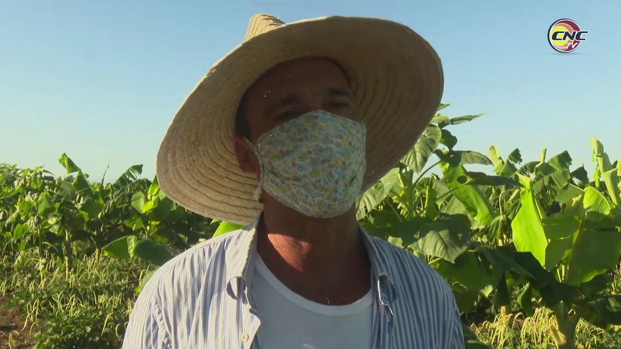 Campesino de Granma crece en la producción de alimentos