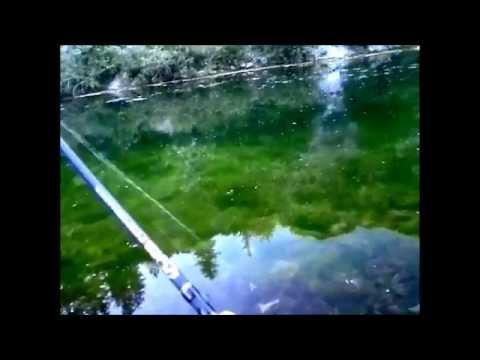 FishingWithAdam – Spring Trout Fishing Trip – Vivian Park Pond