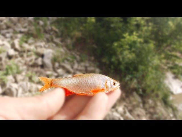 MICRO FISHING In a Small Creek!