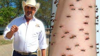 Político promete acabar con los mosquitos si gana
