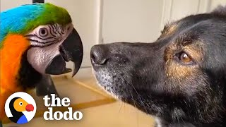 Dog And Parrot Who Didn't Get Along Spend Every Single Moment Together Now | The Dodo Odd Couples