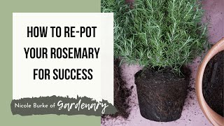 How To Re-Plant Your Rosemary For Success!
