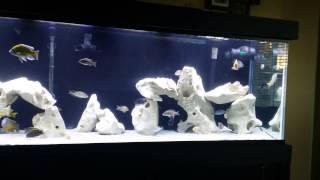 live fish direct - 免费在线视频最佳电影电视节目 - Viveos Net