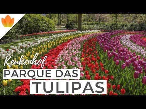 Keukenhof 2019: veja o Parque das Tulipas da Holanda em primeira mão!   Holandesando