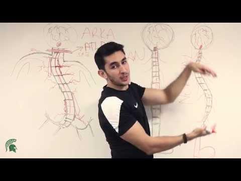 Esercizi a spina dorsale s scoliosis