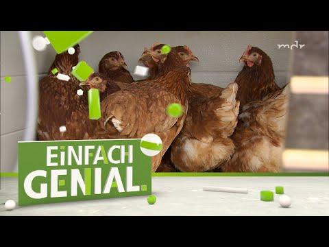 Der smarte Hühnerstall | Einfach genial | MDR