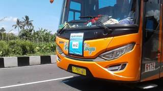 HUNTING TELOLET!!! Bus Cahaya Trans, Bus SAE, Rosalia Indah