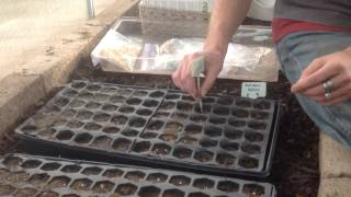 Greenhouse Planting Seed Starts