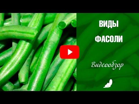 Виды фасоли 🌱 Выбираем семена❗ Зерновая и Спаржевая фасоль